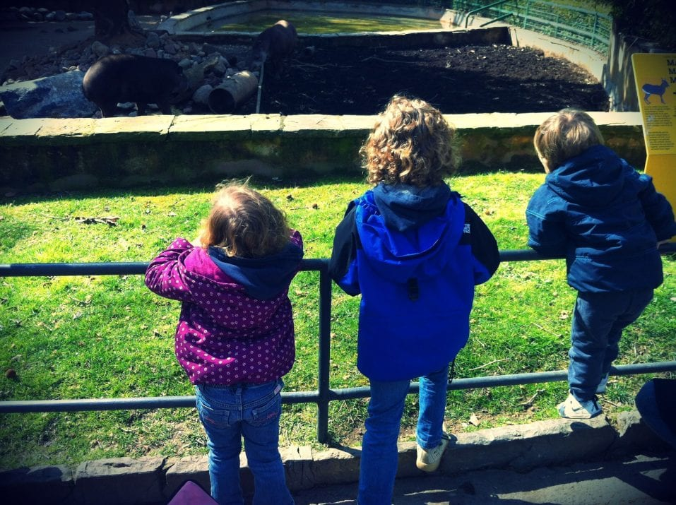 A family day out at the zoo