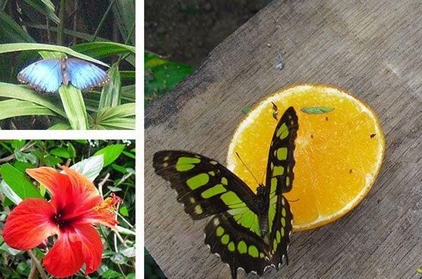 butterfly_park