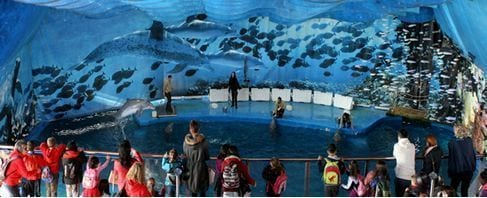 delfines-zoo-barcelona-colours