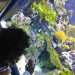 Un día en familia en el Aquàrium de Barcelona