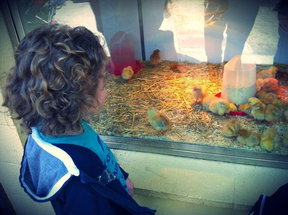 zoo animales de granja