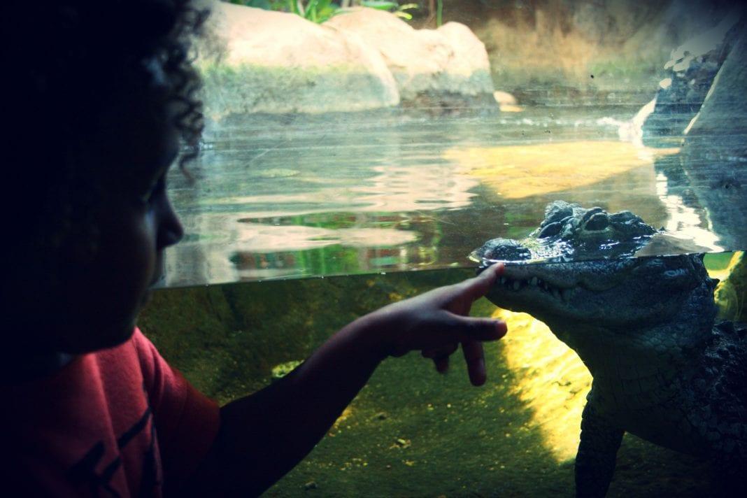 zoo crocodile