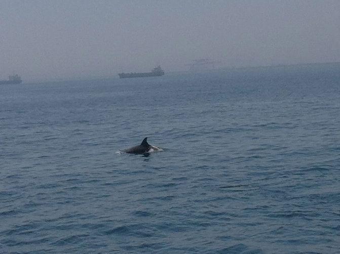 Delfines en Barcelona