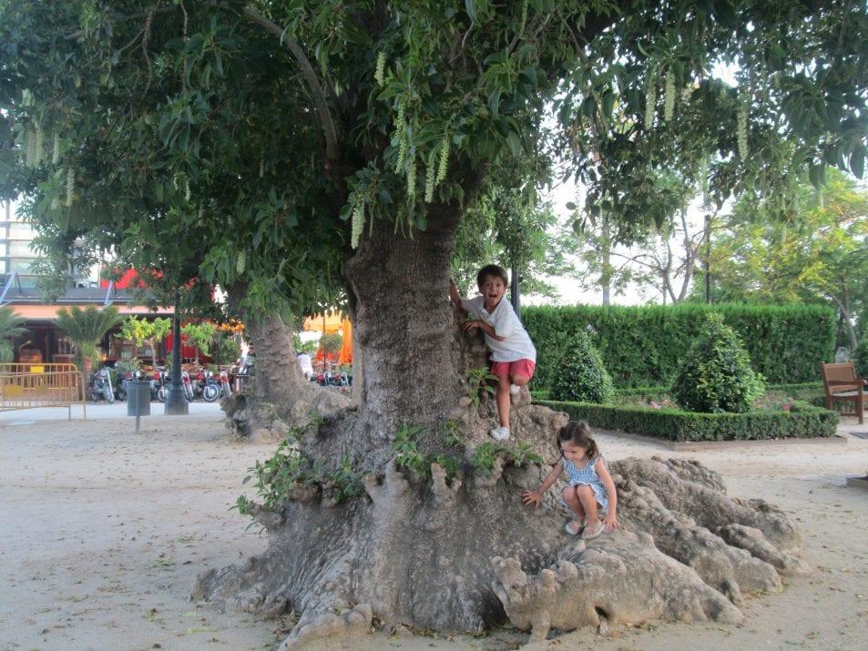 los niños al arbol