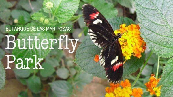 Butterfly park, el parque de mariposas de la Costa Brava