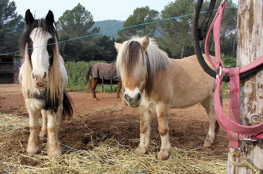 Hípica Font d'en Fargues – Cowboy por un día