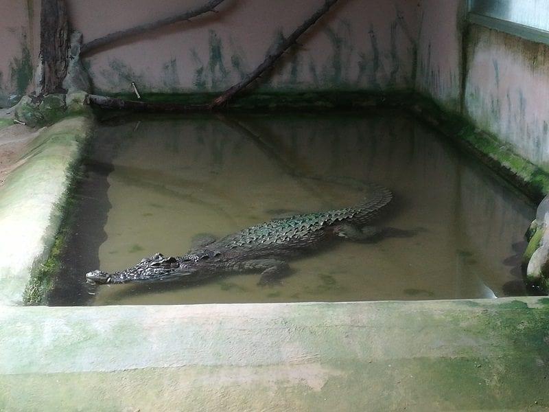 VISITA AL CRARC, un paseo entre reptiles y anfibios