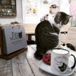 Espai de gats: el primer CAT CAFÉ de Barcelona