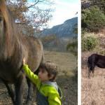 Un día familiar entre caballos en libertad con la Fundación Miranda