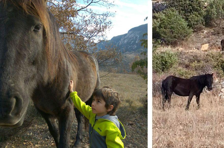 fundación Miranda | caballos en libertad Barcelona